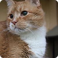 Adopt A Pet :: Minnie Bird - Colorado Springs, CO