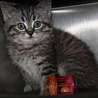 Adopt A Pet :: Lillian (In Foster Care) - Marietta, OH