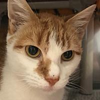 Adopt A Pet :: Persimmon - Lafayette, NJ