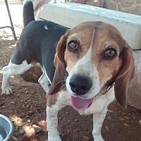 Adopt A Pet :: Elsie - Apple Valley, CA