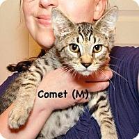 Adopt A Pet :: Comet - West Orange, NJ