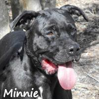 Adopt A Pet :: MINNIE - Palm Coast, FL