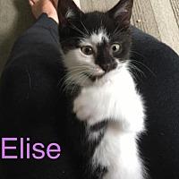 Adopt A Pet :: Elise - Hamilton, ON