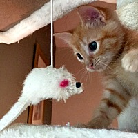 Adopt A Pet :: Alfie - Durham, NC