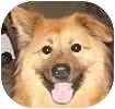 German Shepherd Dog Mix Dog for adoption in Hamilton, Ontario - Kammy