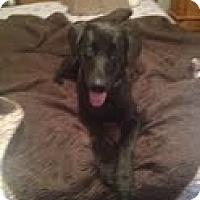 Adopt A Pet :: Gretchen - Lewisville, IN