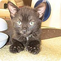 Adopt A Pet :: Rodeo - Narberth, PA