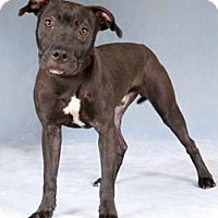 Adopt A Pet :: Mink - Chicago, IL