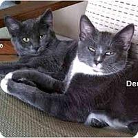 Adopt A Pet :: Deuce - Portland, OR