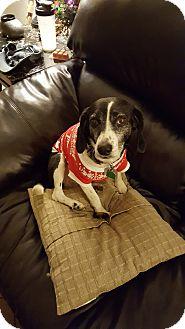 Beagle Mix Dog for adoption in Yukon, Oklahoma - Lucy