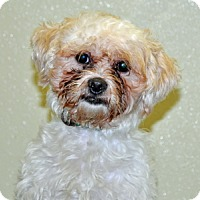 Adopt A Pet :: Casper - Port Washington, NY