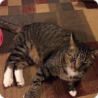 Adopt A Pet :: Boo - Chattanooga, TN
