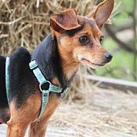 Adopt A Pet :: Jax - South Bend, IN