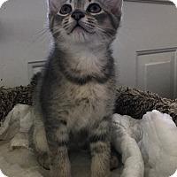 Adopt A Pet :: Lars - Dalton, GA