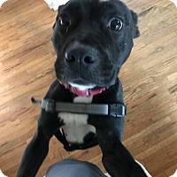 Adopt A Pet :: LEE-PARKER - Bridgewater, NJ