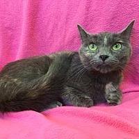 Adopt A Pet :: Anna - Rochester, MN