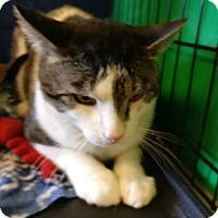 Adopt A Pet :: Henley - Avon, OH