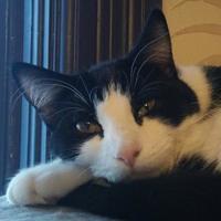 Adopt A Pet :: Bonnie - Owatonna, MN