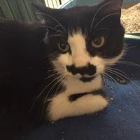 Adopt A Pet :: Bagnor - Manitowoc, WI