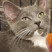 Adopt A Pet :: Rainbow Dash - Bensalem, PA