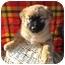 Photo 2 - Husky Mix Puppy for adoption in Marion, North Carolina - Nala