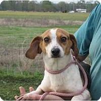 Adopt A Pet :: Abby - Salem, NH