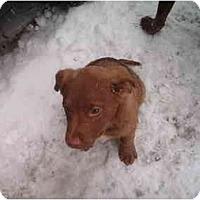Adopt A Pet :: Killian - North Jackson, OH