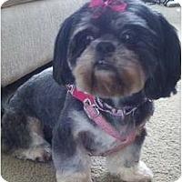 Adopt A Pet :: Mitzie-SC - Mays Landing, NJ