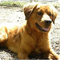 Adopt A Pet :: Tawney - Windham, NH