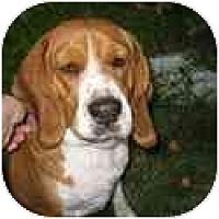 Adopt A Pet :: Sioban - Phoenix, AZ