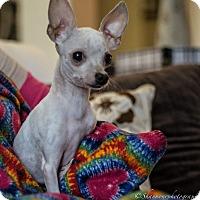 Adopt A Pet :: Twix - Vacaville, CA