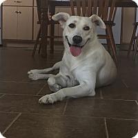 Adopt A Pet :: Heidi - Russellville, KY