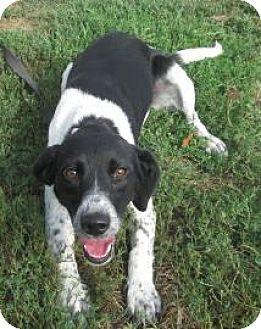 Terrier (Unknown Type, Medium) Mix Dog for adoption in Knoxville, Iowa - Poppy