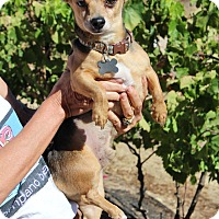 Adopt A Pet :: Snoopy - Creston, CA