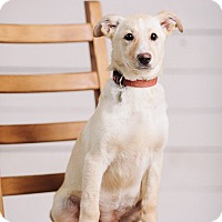 Adopt A Pet :: Spruce - Portland, OR