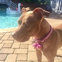 Adopt A Pet :: Lulu - Loganville, GA