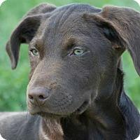 Adopt A Pet :: Marco - Broken Arrow, OK
