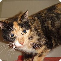 Adopt A Pet :: Peach - Ridgeland, SC