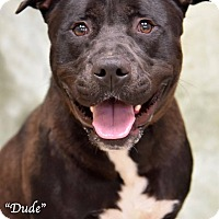 Adopt A Pet :: Dude - Newnan City, GA