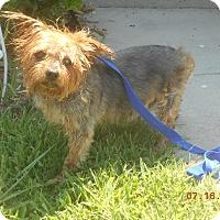 Adopt A Pet :: Rocky - haslet, TX