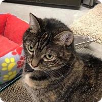 Adopt A Pet :: Baby Girl - Breinigsville, PA