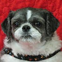 Adopt A Pet :: MASON - Eden Prairie, MN