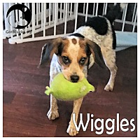 Adopt A Pet :: Wiggles - Pittsburgh, PA