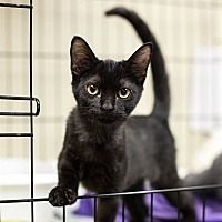 Adopt A Pet :: Nicki - Lake Jackson, TX