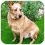 Photo 2 - Australian Cattle Dog Mix Dog for adoption in Phoenix, Arizona - Dundee