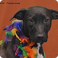 Adopt A Pet :: Bonnie - PENDING, in Maine - kennebunkport, ME