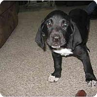 Adopt A Pet :: Peggy - Glastonbury, CT