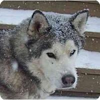 Adopt A Pet :: Yukon - Belleville, MI