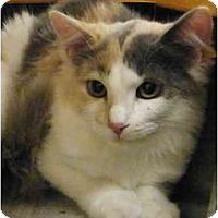 Adopt A Pet :: Shell - Modesto, CA