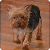 Adopt A Pet :: Bogey - Greensboro, NC